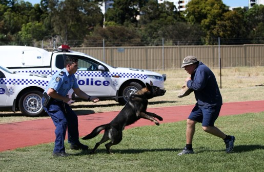 This Police dog is about to take a big bite